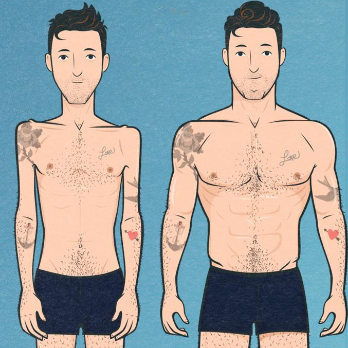 Skinny to Muscular Illustration
